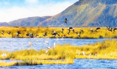 云南保山腾冲水上草原北海湿地