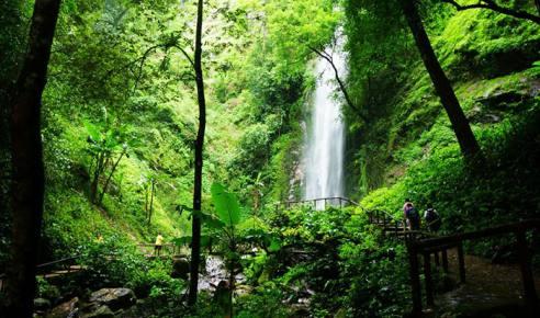 云南德宏瑞丽莫里热带雨林区