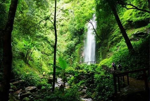莫里热带雨林景区