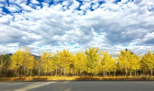 秋天适合一个人小住几日的古村镇,感受一下安静的时光!
