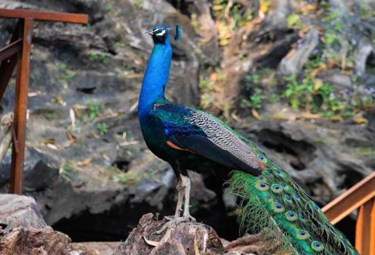 游览云南德宏州,体验不一样的美景与美食